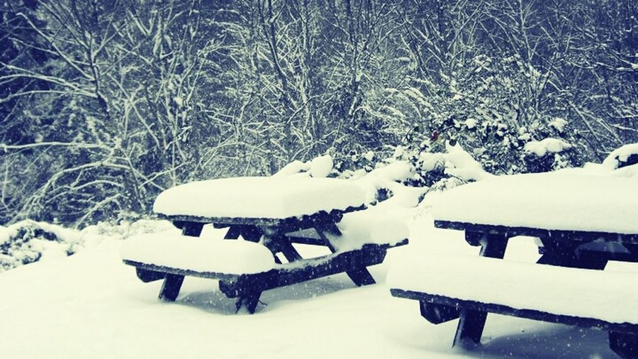 Washington Snow Covered Picnic Table