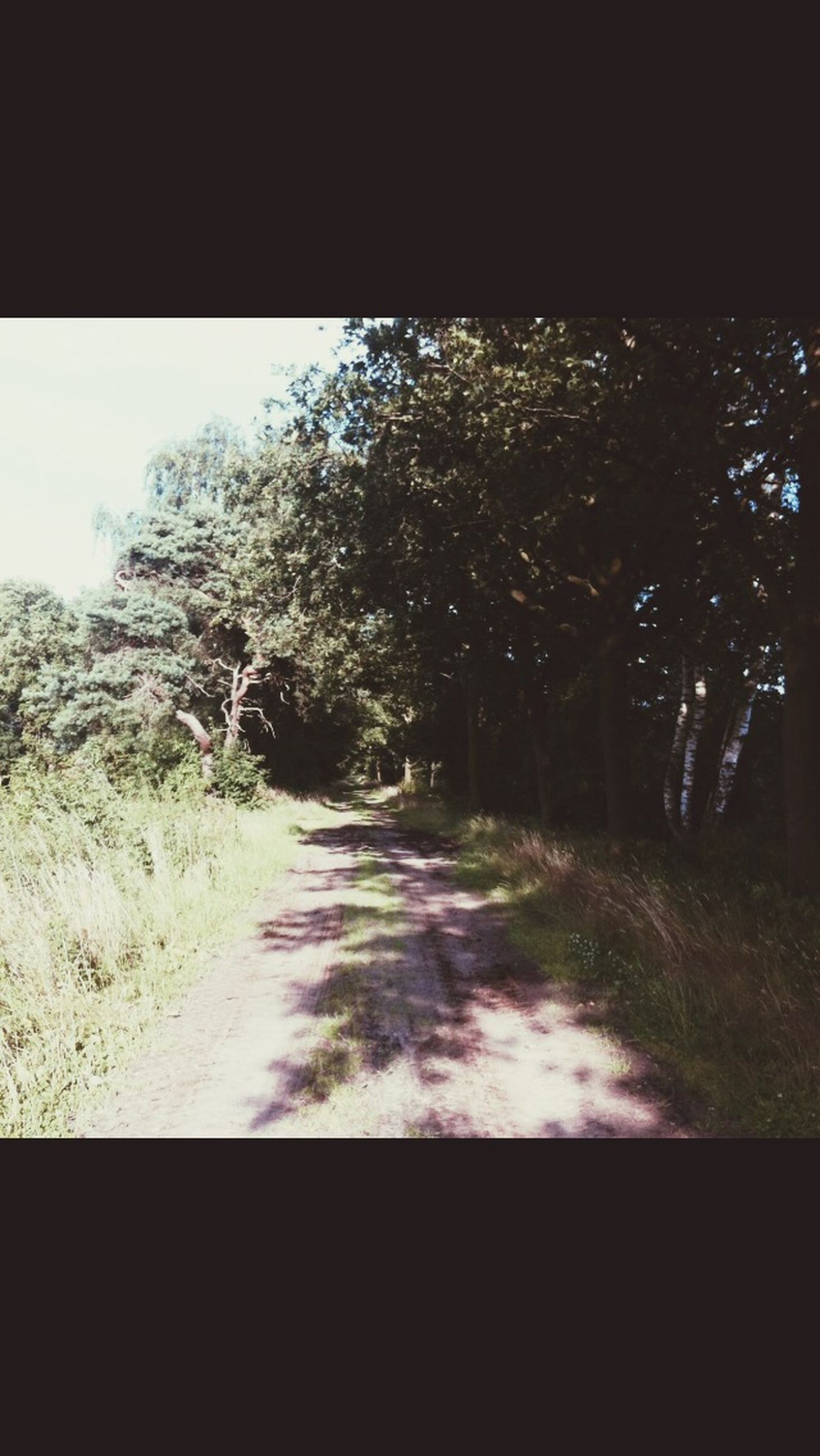 tree, the way forward, road, transportation, diminishing perspective, transfer print, auto post production filter, street, vanishing point, tranquility, nature, growth, sky, tranquil scene, country road, outdoors, no people, empty road, day, sunlight