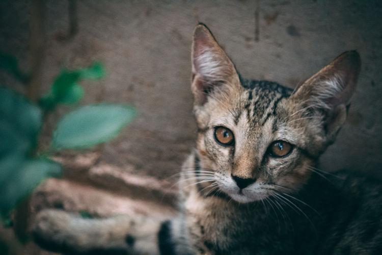 Kitten Stray Animal Yellow Eyes Animal Hair Animal Eye Paw Animal Face Whisker Cat Carnivora