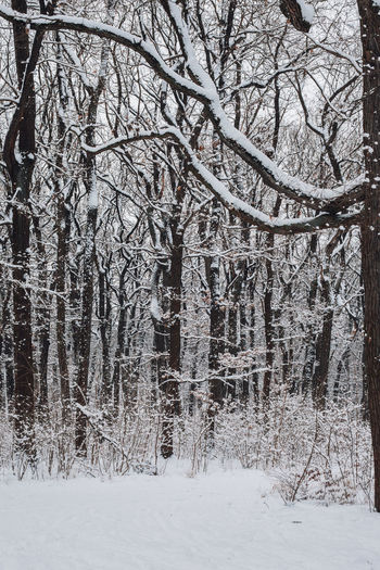 Bare trees on snow covered field in forest