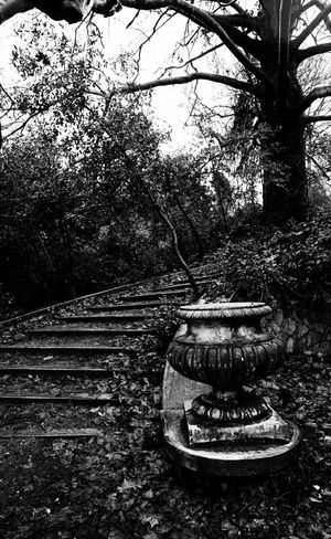 Black And White Black & White Black&white Black And White Photography EyeEm Gallery Blackandwhite Photography EyeEm Best Shots - Black + White Black And White Collection  Abandoned Buildings Abandoned House Architecture Abandonment Abandoned Building Architecture_bw Architecture_collection Stairs Marble Stairs Forest