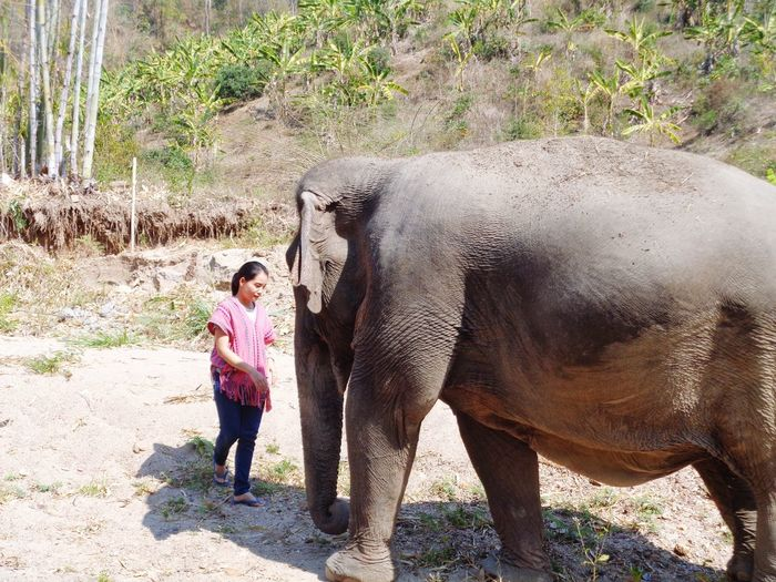 Elephant Mammal Indian Elephant Real People Domestic Animals Standing Washing One Animal Cleaning Outdoors Bonding Men Adult One Person Day Nature People Adults Only