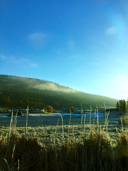 Morning Pretty Cold Winter Washington Washington State Small Town Foggy Morning Fog Sun Sunrise Sunshine Mountains Mountain Tree Trees And Sky Buildings Field Cat Tail Sunlight Nature Nature_collection Nature Photography Naturelovers Snow