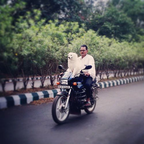 A Ride with dear one dream of every one 😏😂 Pets Rdream Ride Love Dog Paradip Odisha