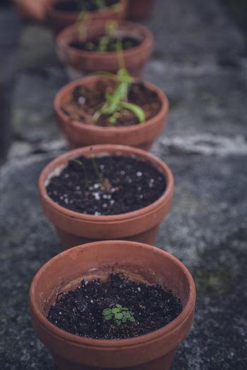 Breeding Seed Urban Gardening Vegetables & Fruits Vegetarian Food Healthy Eating Healthy Food Healthy Lifestyle Home Gardening Lifestyles Self Sufficiency Self-sufficiency Vegetable