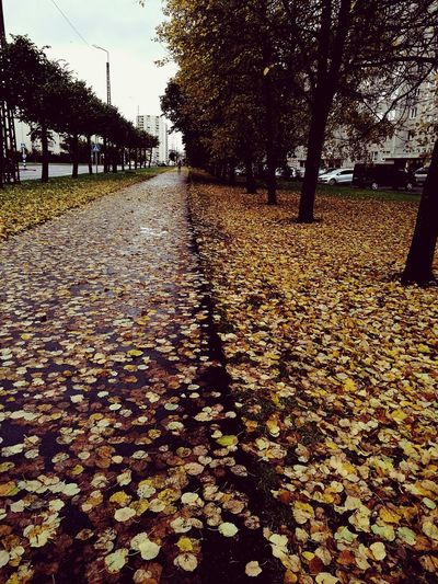 Beauty In Nature Water Outdoors Day Leaf Tree Nature Autumn No People Growth Sky Cold Wet Tallinn Estonia Yellow Leaves