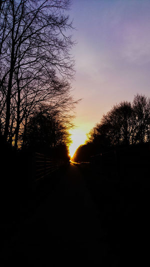 Golden Path Sunset Sky Silhouette Nature Tree Tranquility Outdoors Beauty In Nature Sun Scenics Eye4photography  Beautiful Check This Out Open Your Mind EyeEm Best Shots Sonyxperiaxcompact Golden Hour Spring Has Arrived Spring Golden Path