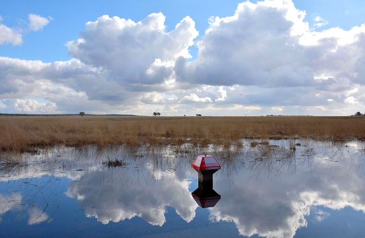 Paddestoel Hoge Veluwe Eye4photography  Clouds And Sky Sky And Clouds Skyporn Sky Signpost Weather Water Water Reflections Red Blue Sky Outdoors Plain Hogeveluwe Eyeemphotography Beautiful Nature Nature Photography Landscape Landscape_photography Landscape_Collection