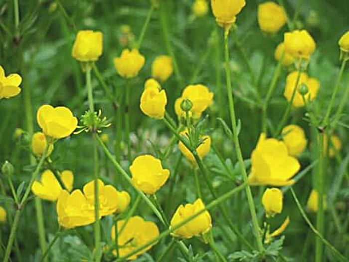 Flowers Yellow Green Gelinçicegi In The Campus Cicekler Bahar