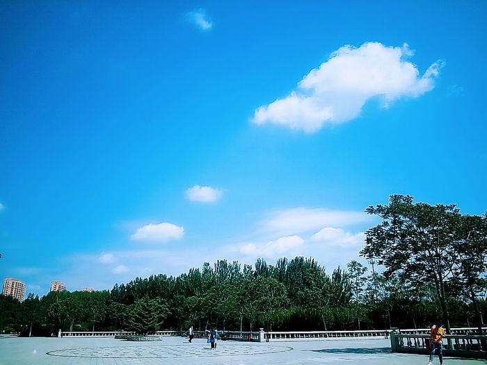 当你要离开一座城市的时候,会发现这里的天比以前的蓝,风比以前的暖,连雾霾都好像没有了…… Blue Outdoors Beauty In Nature Tree Cloud - Sky Sky Day No People Nature Bird