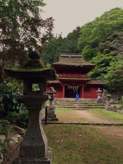 鷲原八幡宮 WASHIHARAHATHIMANGU 茅葺き屋根 Thatched Roof Shimane Prefecture Hachimangu 島根県 津和野 鷲原八幡宮 Tree Plant Architecture Built Structure Building Green Color
