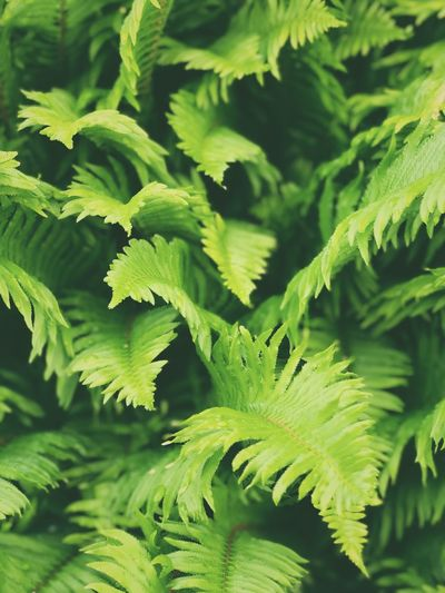 High angle view of fern leaves