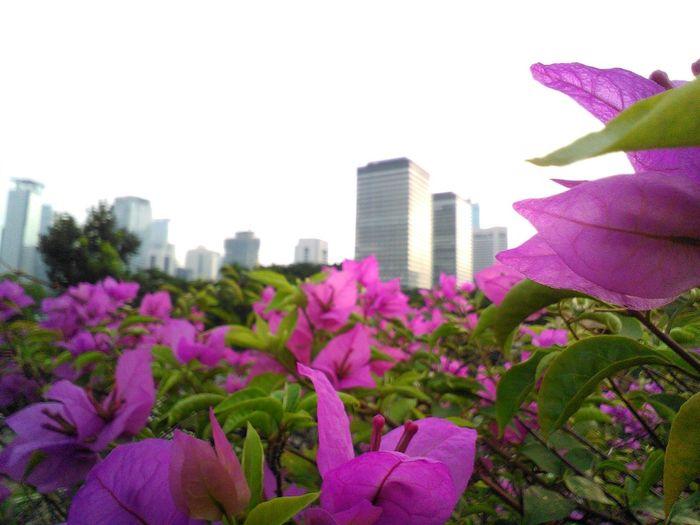 City Spot City View  Beatiful Day! City Garden Flower And The City Landscape_photography Landscape_captures City Landscape