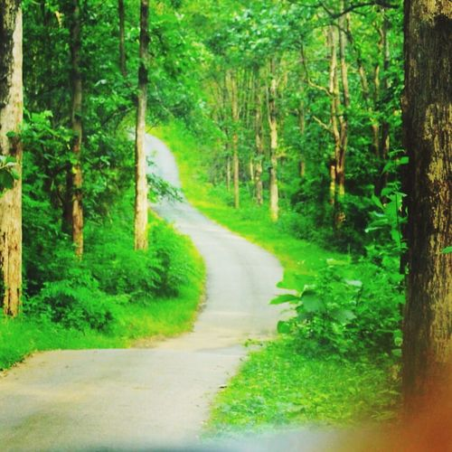 Nature Tree The Way Forward Forest Road Green Color Plant Tranquil Scene Growth Tranquility Landscape Scenics No People Curve Single Lane Road Beauty In Nature Day Outdoors Grass Kerala GodsOwnCountry Theroadlesstraveled EyeEmNewHere Let's Go. Together.