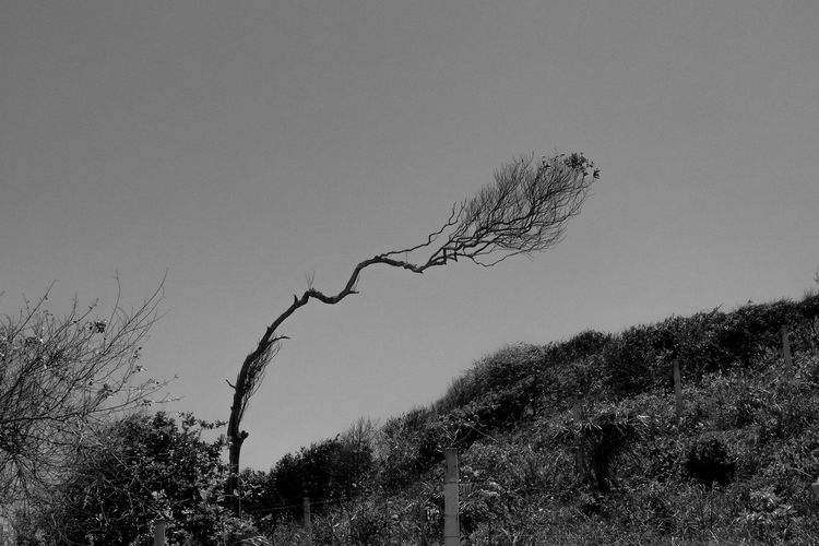 Leaning plant Beauty In Nature Blackandwhite Clear Sky Close-up Day Growth Low Angle View Nature No People Outdoors Plant Scenics Sky Tranquility Tree Perspectives On Nature Black And White Friday