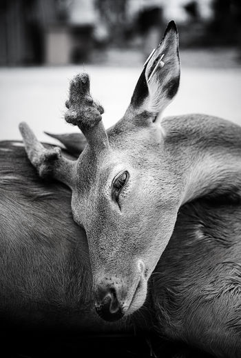 summer nap time Animal Head  Animal Themes Close-up Day Deer Moments Dog Domestic Animals Focus On Foreground Live For The Story Mammal Nature No People One Animal Outdoors Pets Relaxing