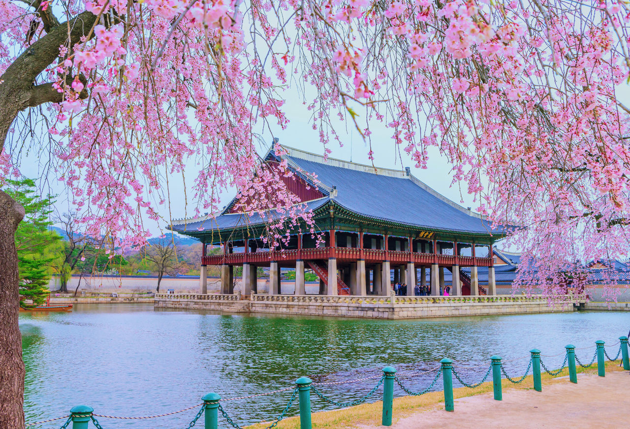 tree, built structure, plant, water, architecture, building exterior, nature, day, building, growth, waterfront, no people, lake, beauty in nature, flower, flowering plant, outdoors, place of worship, sky, cherry blossom