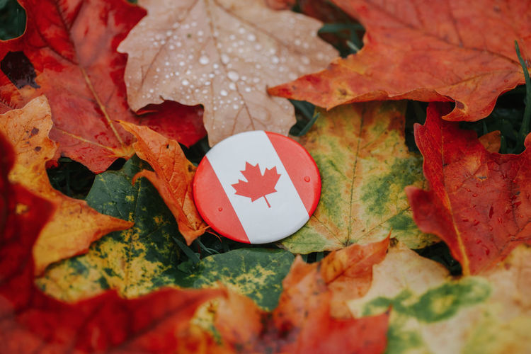 Round circle badge with national canadian flag symbol lying on ground in autumn leaves