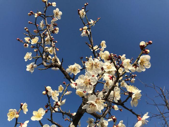 Spring Fragility Flowering Plant Plant Flower Beauty In Nature Sky Freshness