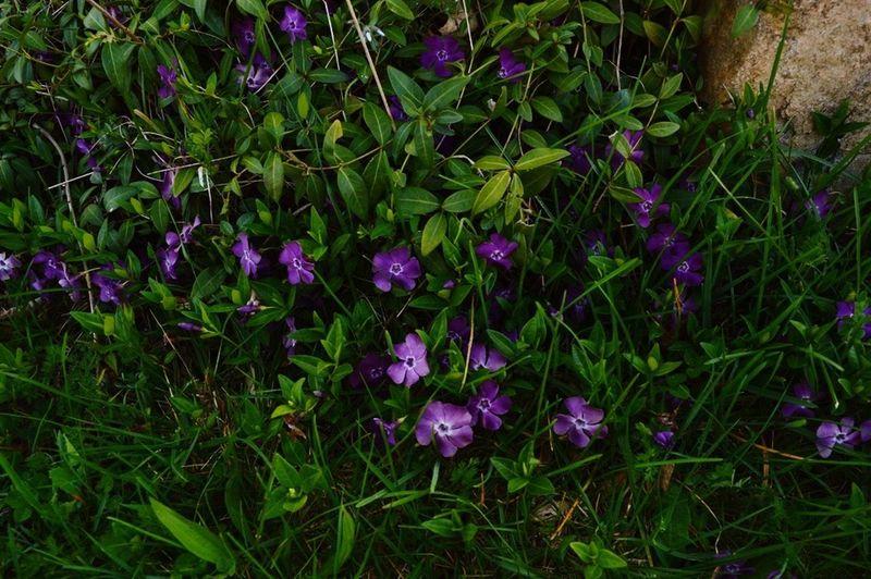Spring Into Spring Viollett First Eyeem Photo