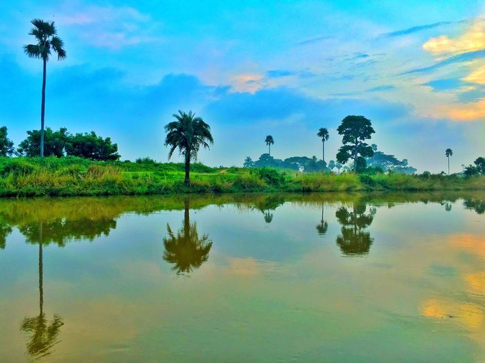 The Reflection of Mother Nature Water Reflection Palm Tree Blue Tranquil Scene Tree Scenics Waterfront Calm Sky Beauty In Nature Nature Majestic Cloud - Sky Outdoors Non-urban Scene Tranquility