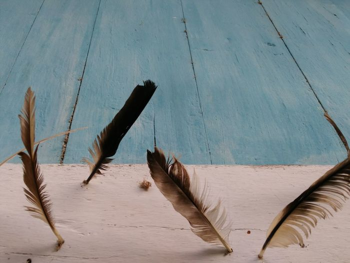 View of feather against wall