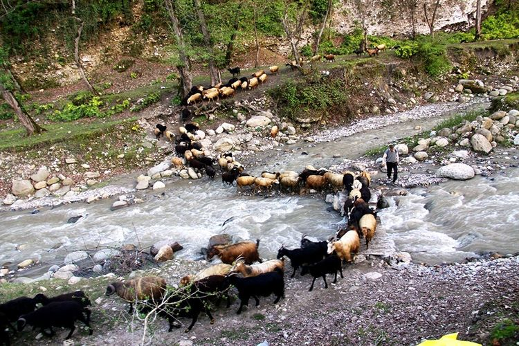 Sheeps Jangle Iran♥ Iran Chamestan River Enjoying Life Nice Day Animals World Taking Photos