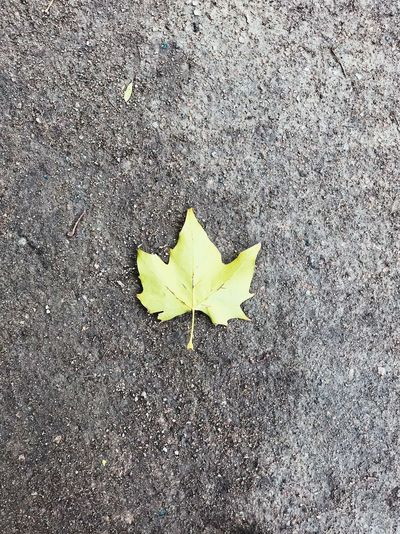 High angle view of dry leaf in autumn