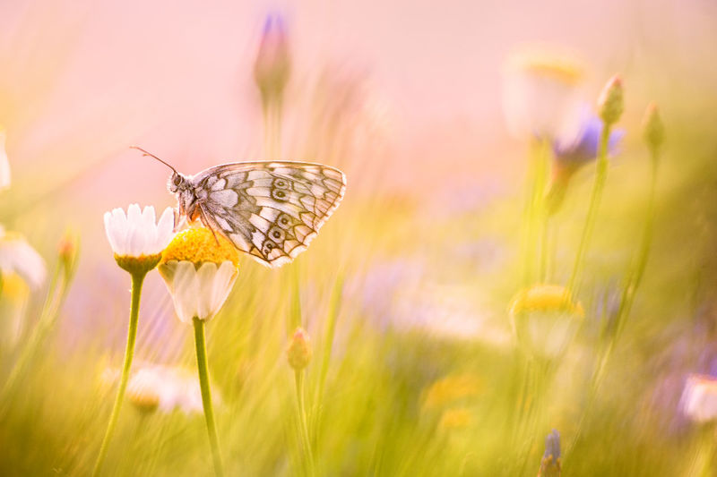 Close-up of butterfly pollinating flower in spring