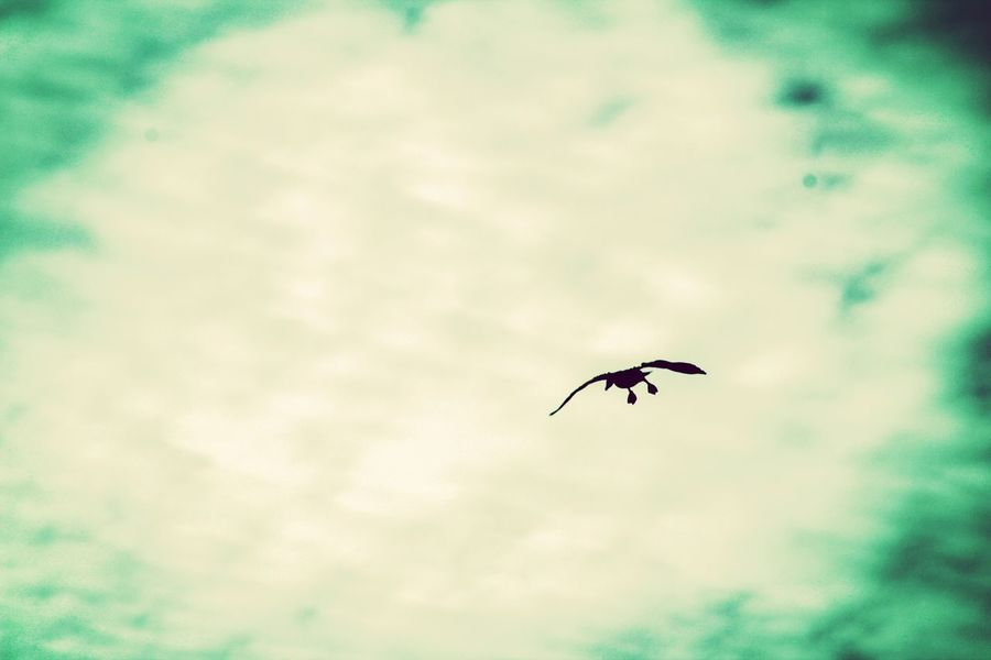 Check This Out Goose Birds In Flight Coming In For A Landing Taking Photos Eyem Nature Lovers  EyeEm Gallery Photography In Motion Eyemphotography Bird Photography Birds_collection