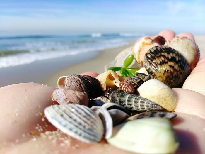 Collection of Beachy Treasure Collection Treasure Beachphotography Beach Beach Life Close-up POV Holding Macro Hand Vacation Beach Photography Green Color Green Sunny Sunny Day Found Low Angle Shot Leisure Activity Sea Sea Life Beach Wave Water Seashell Sand Crustacean Close-up Horizon Over Water Shell Seaweed