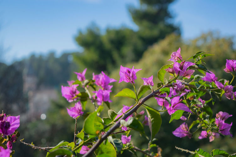 Beautiful purple flowers Natural Natural Beauty Beauty In Nature Blossom Botany Close-up Colorful Day Environment Flower Flower Head Flowering Plant Focus On Foreground Fragility Freshness Growth Nature No People Outdoors Petal Pink Color Plant Purple Violet Vulnerability