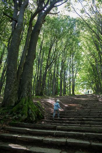 Rear view of boy walking in forest