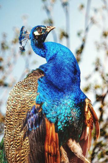 Bird Photography Beauty In Nature Eyem Best Shots Nature_collection Close-up EyeEm Masterclass Outdoors Sunshine Natures Diversities The Essence Of Summer The Great Outdoors - 2016 EyeEm Awards