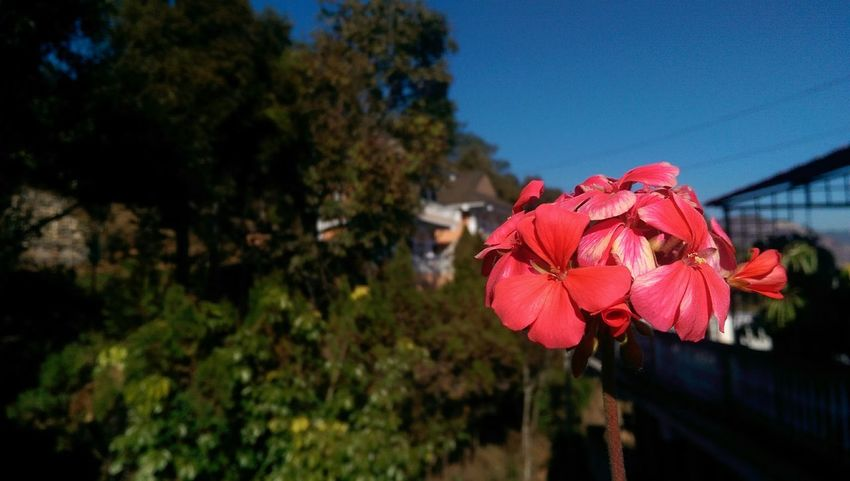 Depth Of Field Unedited Flower Photography EyeEmBestPics Flowers Htc One M8 Photography Pleasant