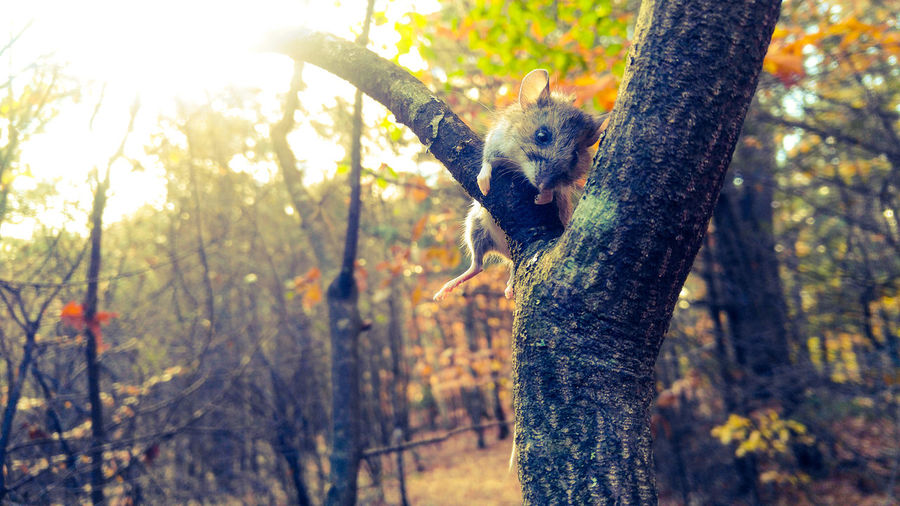 Tree Nature Forest Tree Trunk Animals In The Wild Day One Animal Outdoors Beauty In Nature Growth Animal Themes Close-up No People Branch Mammal Sky Smartphonephotography My Best Photo