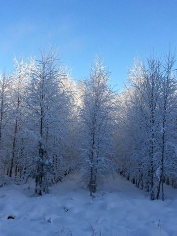 Snow Winter Cold Temperature Nature Beauty In Nature Naturelovers Forest Winter Colors