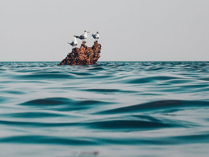 View of ducks swimming in sea against sky
