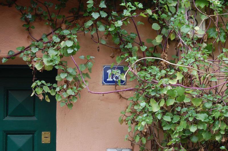 La porta Plant