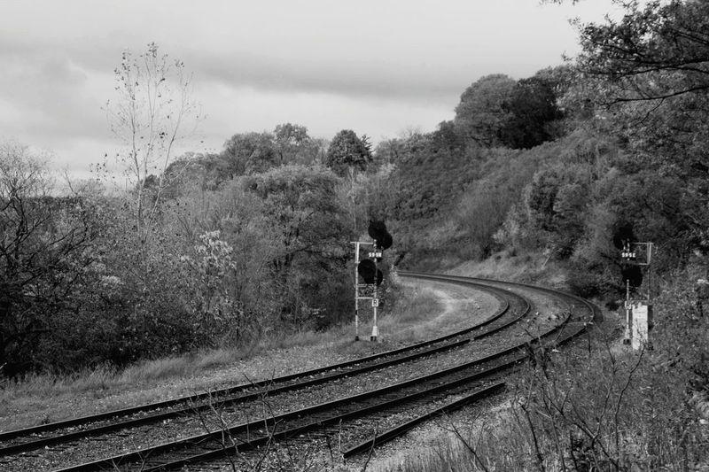 Railway tracks amidst trees against sky
