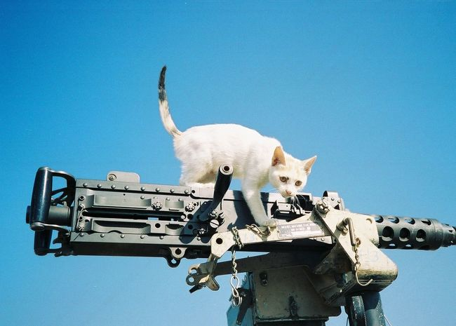 Animal Themes Blue Cat Clear Sky Deployment Desert Human Iraq . Baghdad Kitty Low Angle View Military No People One Animal Sky War Weapon