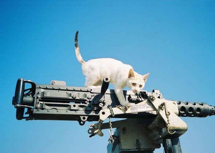 Cat Climbing On Gun