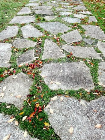 Outdoors Stones Stonesteps Way Out No People Close-up Flowers,Plants & Garden Autumn🍁🍁🍁 Nature On Your Doorstep EyeEm Best Shots Walking Around Streetphotography The Week Of Eyeem Perspective Lines Urban Photography Stone Slabs Nature