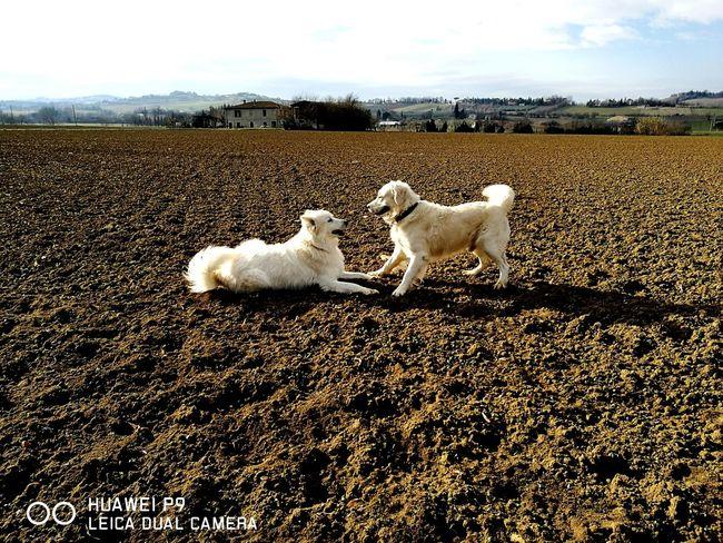 Dogslife Friend Happytime Sempreingiro Argo&frida Giochi Love Solosorrisi