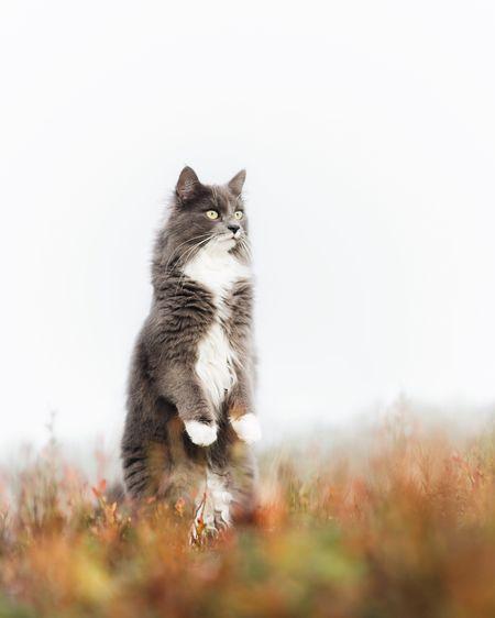 Cat Pets Nature