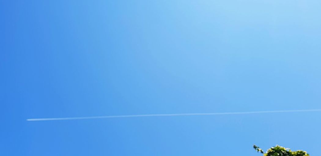Vapor Trail Contrail Airshow Blue Tree Sky Fighter Plane Military Airplane Propeller Airplane US Air Force The Great Outdoors - 2018 EyeEm Awards Summer Road Tripping