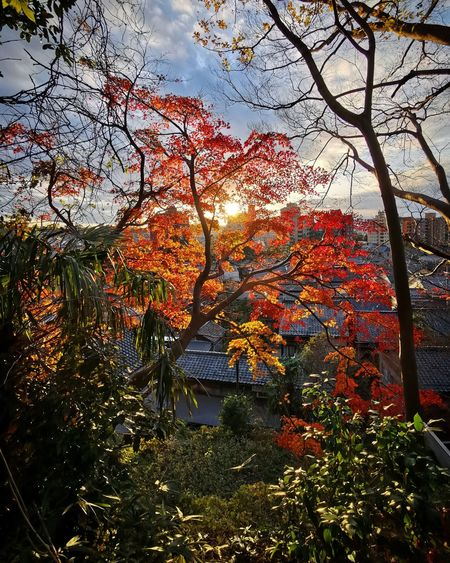 Low angle view of flowering plants during autumn