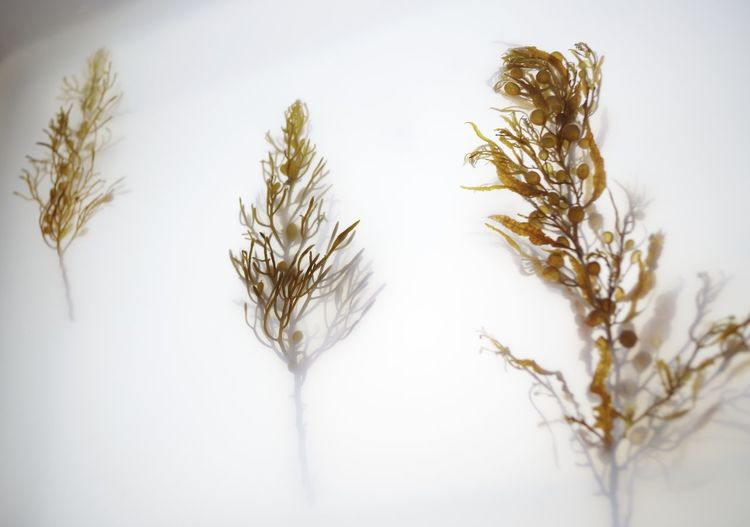 Close-up of snow against white background