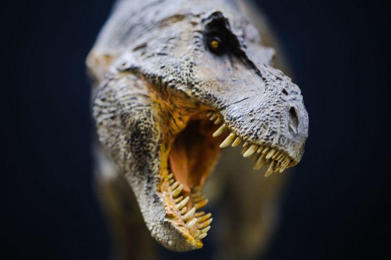 Close-up of dinosaur sculpture against black background