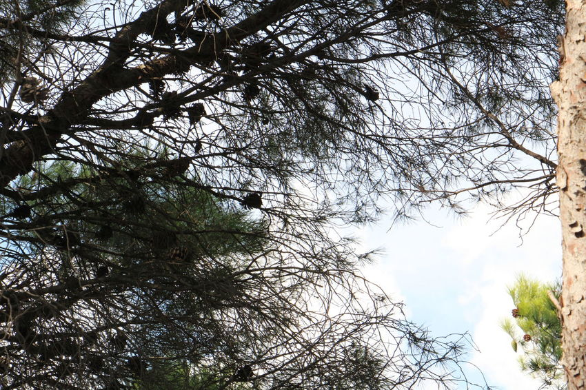 Bare Tree Beauty In Nature Branch Cloud - Sky Nature Plant Sigeanreserveafricaine Tranquility Tree Tree Canopy